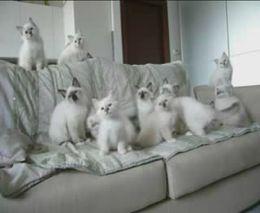 Прикольные котята (2.173 MB)