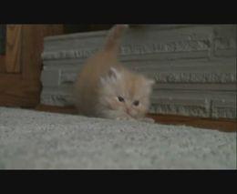 Танцующий котенок (5.284 MB)