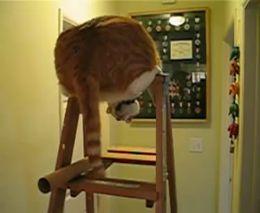 Смешной кот на лестнице (3.920 MB)
