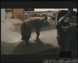 Собака и шарик (1.511 MB)