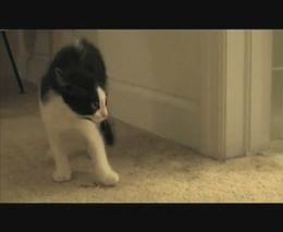 Боевой кот (5.661 MB)