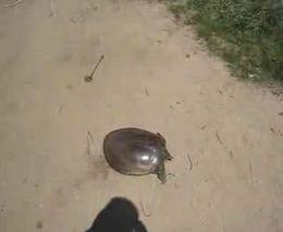 Скоростная черепаха (1018.509 KB)