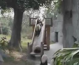 Панды и горка (3.174 MB)