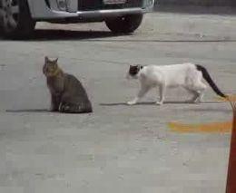 Бой котов (2.921 MB)