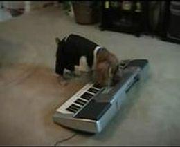 Музыкальный пес (4.232 MB)
