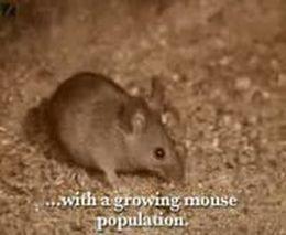 Мышки-дигустаторы