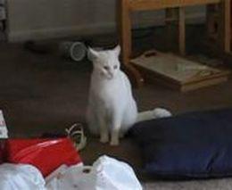 Прикольный котик (1.693 MB)