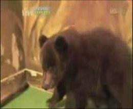 Прикольная озвучка медвежонка трусишки (1.558 MB)