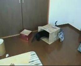 Кот в коробке (4.416 MB)