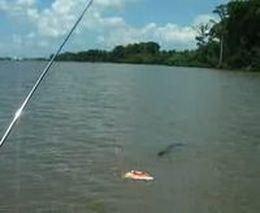 Охота крокодила на кораблик (757.679 KB)