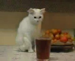 Коту хочется чаю (1.179 MB)