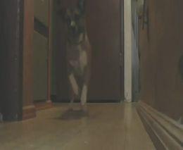 Собака - танцор (1.337 MB)