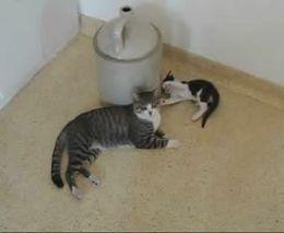 Терпеливая кошка (2.973 MB)