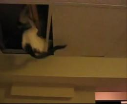 Кот следит за тобой (1.768 MB)