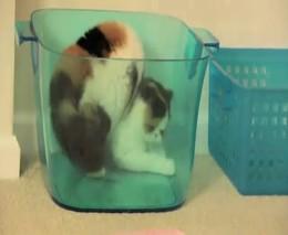 Котенок играет со своим отражением (5.161 MB)