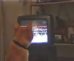 Кот смотрит бокс (770.013 KB)