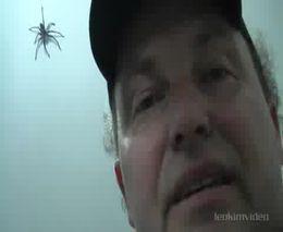 Как ловить паука (2.195 MB)