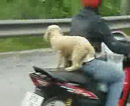 Пес-байкер