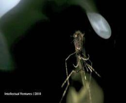 Убийство комара лазером (1.308 MB)