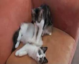 Кот-массажист