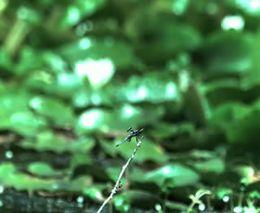 Промах лягушки (252.373 KB)