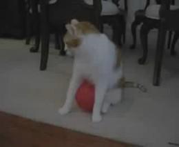 Кот и наэлектризованный шарик (3.113 MB)