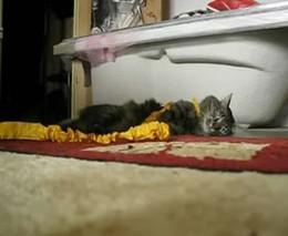 Ну очень ленивый кот (4.731 MB)