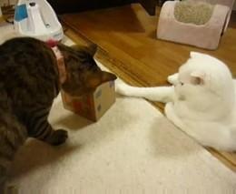 Коты и игрушка (3.691 MB)