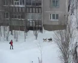 Мужчина спас девушку от своры собак (1005.362 KB)