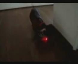 Пес и лазер (1.663 MB)
