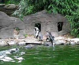 Развлекуха для пингвинов (5.268 MB)