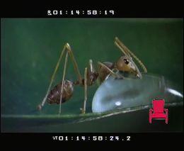Трапеза муравья (1.007 MB)