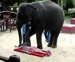 Слоновий