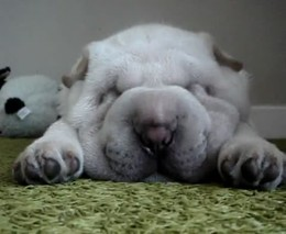 Спящий