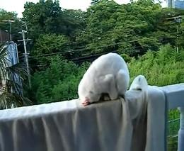 Кот, который прикольно спит (4.781 MB)