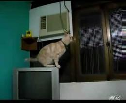 Кот не может далеко прыгать (433.064 KB)