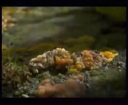 Как растут грибы (4.183 MB)