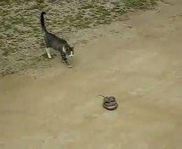 Кот и змея (4.859 MB)