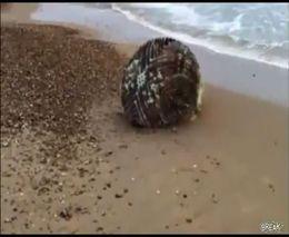 Что-то странное из океана (1.216 MB)