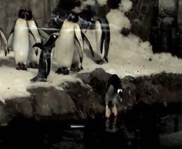 Пингвин-фокусник