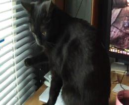 Кот и жалюзи (4.606 MB)