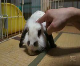 Хорошенький маленький кролик (2.167 MB)