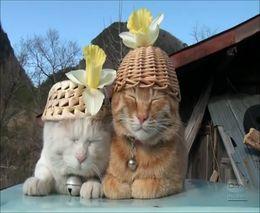 Коты в расслабухе (3.108 MB)
