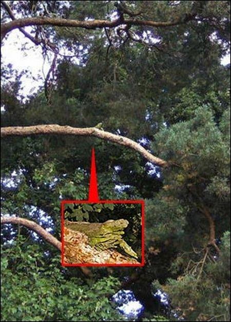 Как спасали игуану (3 фото)