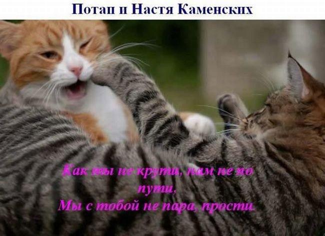 Поющие коты (28 фото)