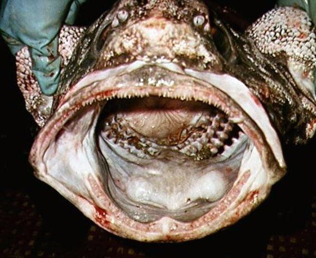 Стремные рыбки (13 фото)