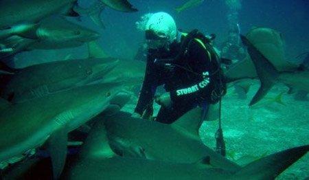 Купания с акулами опасны (7 фото)