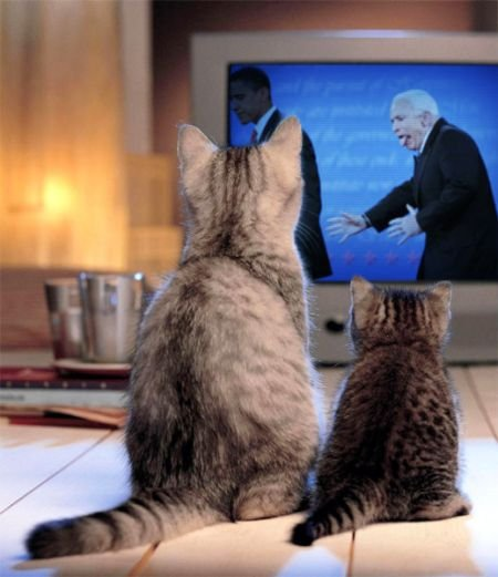 Фотожаба на Маккейна (34 фото)