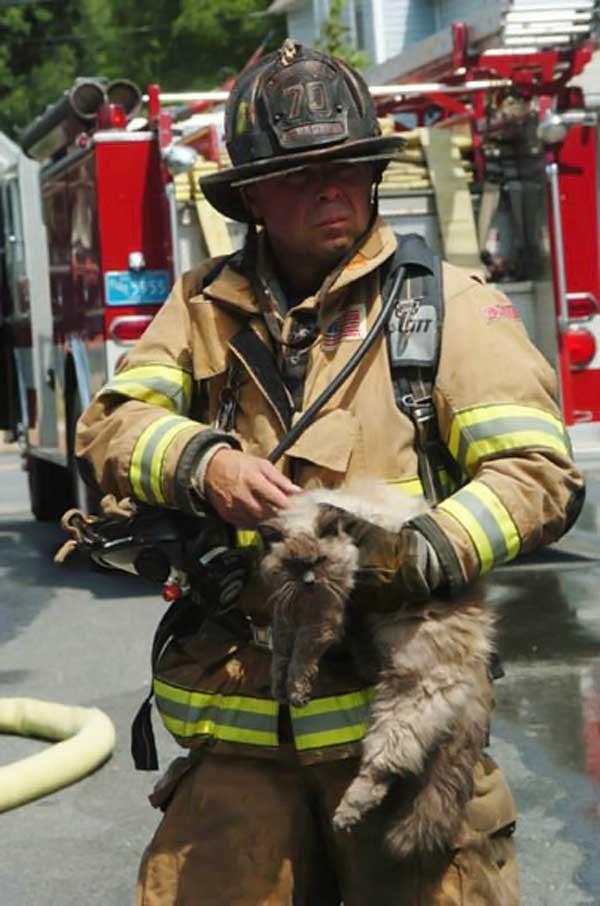 Пожарые спасают котов (19 фото)