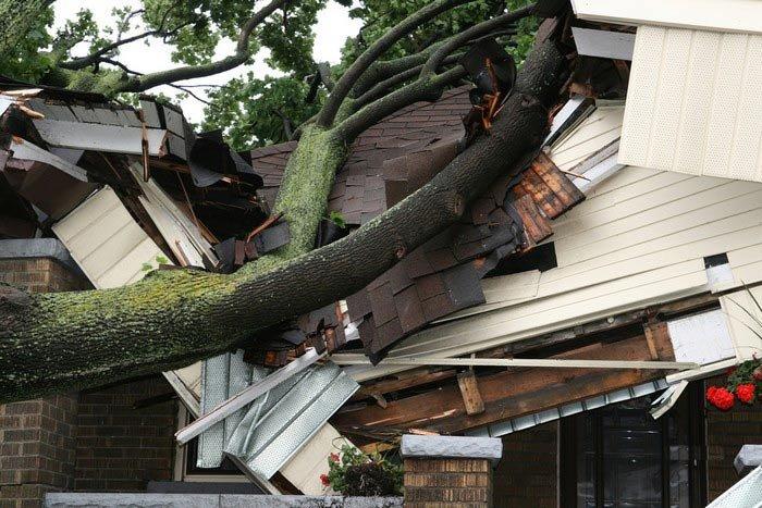 Деревце упало (7 фото)